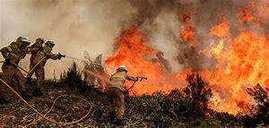 Incendios Forestales, Efectos medioambientales
